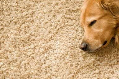 Professional Carpet Cleaning Chilwell UK